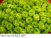 Огромный букет зеленых роз. Стоковое фото, фотограф Ольга Сейфутдинова / Фотобанк Лори