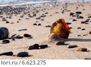 Янтарь на берегу Балтийского моря. Малая глубина резкости. Стоковое фото, фотограф Ирина Горбачева / Фотобанк Лори