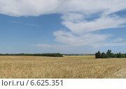 Ячменное поле. Стоковое фото, фотограф Дмитрий / Фотобанк Лори