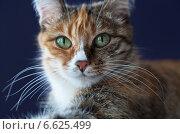 Купить «Домашняя кошечка с большими зелеными глазами крупным планом (лат. Felis silvestris catus)», фото № 6625499, снято 30 ноября 2009 г. (c) Виктория Катьянова / Фотобанк Лори