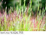 Луговое разнотравье. Стоковое фото, фотограф Инна Остановская / Фотобанк Лори