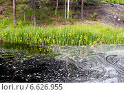 Болотные ирисы в воде. Стоковое фото, фотограф Инна Остановская / Фотобанк Лори