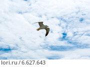 Чайка летит в небе (2014 год). Стоковое фото, фотограф Катерина Вахе / Фотобанк Лори