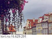 Цветы, Прага (2009 год). Стоковое фото, фотограф Виноградова Вероника / Фотобанк Лори