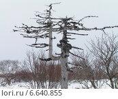 Причудливое сухое дерево. Стоковое фото, фотограф Валентин Ищук / Фотобанк Лори