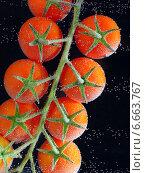 Ветка красных помидоров в воде с пузырьками. Стоковое фото, фотограф Iordache Carmen Anne Marie / Фотобанк Лори