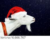 Купить «Белая коза в шапочке Санта-Клауса на фоне падающих снежинокй», фото № 6666767, снято 17 июня 2012 г. (c) katalinks / Фотобанк Лори