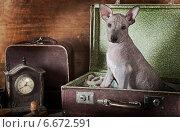 Купить «Щенок сидит в старом чемодане», фото № 6672591, снято 10 ноября 2014 г. (c) Алексей Кузнецов / Фотобанк Лори