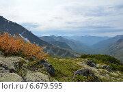 Карликовая береза осенью на склоне хребта Баргузинский у озера Байкал. Стоковое фото, фотограф Пыткина Альбина / Фотобанк Лори