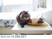 Пушистый полосатый кот в светлой спальне. Стоковое фото, фотограф Ирина Черкашина / Фотобанк Лори