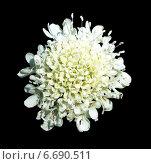 Белый цветок на черном фоне. Стоковое фото, фотограф Юлия Куксова / Фотобанк Лори