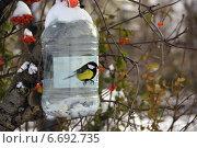 Синица с семечком в клюве возле кормушки. Стоковое фото, фотограф Ирина Черкашина / Фотобанк Лори