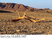 Обломок сухого дерева в пустыне. Египет. Стоковое фото, фотограф Марина Зубрицкая / Фотобанк Лори