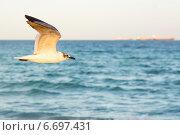 Чайка в полете на фоне моря. Стоковое фото, фотограф Юлия Гладышева / Фотобанк Лори