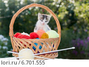 Купить «Маленький белый котенок в корзинке с разноцветными клубками ниток», фото № 6701555, снято 26 августа 2014 г. (c) Володина Ольга / Фотобанк Лори