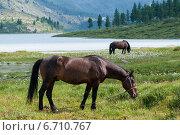 Озеро Аккем, Белуха, кони пасутся. Редакционное фото, фотограф Вячеслав Скоробогатов / Фотобанк Лори