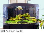 Купить «Красивый полукруглый аквариум с тропическими рыбами на подставке», фото № 6717743, снято 30 октября 2014 г. (c) Евгений Ткачёв / Фотобанк Лори