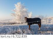 Купить «Лошадь, пасущаяся на заснеженом поле», эксклюзивное фото № 6722839, снято 20 ноября 2014 г. (c) Литвяк Игорь / Фотобанк Лори