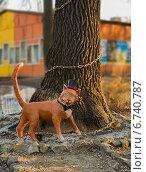 Купить «Рыжий кот учёный ходит по золотой цепи на дубе в парке В.Б. Белинского города Пензы», фото № 6740787, снято 25 ноября 2014 г. (c) Григорий Белоногов / Фотобанк Лори