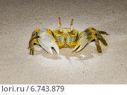 Краб на песке обитающий на Мальдивских островах. Стоковое фото, фотограф Воевудский Евгений / Фотобанк Лори
