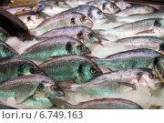 Купить «fresh fish on counter», фото № 6749163, снято 19 января 2019 г. (c) Яков Филимонов / Фотобанк Лори