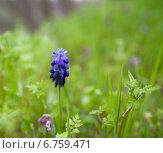 Весна в лесу. Стоковое фото, фотограф Роман Филатов / Фотобанк Лори