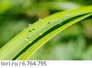 Купить «Зеленая трава в каплях дождя», эксклюзивное фото № 6764795, снято 3 июля 2014 г. (c) Елена Коромыслова / Фотобанк Лори