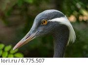 Портрет птицы в зоопарке. Стоковое фото, фотограф Захар Дудников / Фотобанк Лори