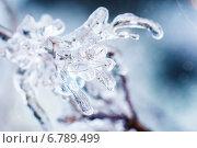 Купить «Замороженная ветка во льду», фото № 6789499, снято 23 мая 2013 г. (c) Natasha Breen / Фотобанк Лори