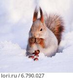 Купить «Белка на снегу», фото № 6790027, снято 16 декабря 2010 г. (c) Андрей Павлов / Фотобанк Лори