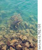 Мусор в море. Стоковое фото, фотограф Евгений Макеев / Фотобанк Лори