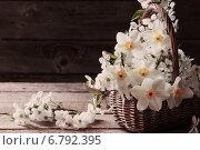 Купить «spring flowers in basket on wooden background», фото № 6792395, снято 29 апреля 2014 г. (c) Майя Крученкова / Фотобанк Лори