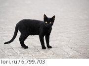Чёрная кошка стоит на тротуаре. Стоковое фото, фотограф Dmitry29 / Фотобанк Лори