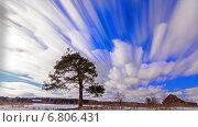 Купить «Дерево в поле, таймлапс», видеоролик № 6806431, снято 15 декабря 2014 г. (c) Никита Майков / Фотобанк Лори