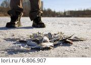 Зимняя рыбалка. Стоковое фото, фотограф Алексей Братчик / Фотобанк Лори