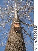 Скворечник на дереве. Стоковое фото, фотограф Алексей Братчик / Фотобанк Лори