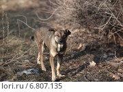 Бродячая собака. Стоковое фото, фотограф Ivanikova Tatyana / Фотобанк Лори