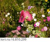 Осенние цветы. Стоковое фото, фотограф Александр Боровиков / Фотобанк Лори
