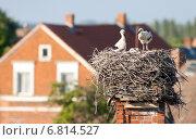Rühstädt, Germany, storks in their nest. Стоковое фото, агентство Caro Photoagency / Фотобанк Лори