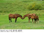 Лошади. Стоковое фото, фотограф Юлия Лекомцева / Фотобанк Лори