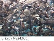 Косяк рыб. Стоковое фото, фотограф Вячеслав Строганов / Фотобанк Лори