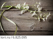 Купить «bunch of Gypsophila on old wooden table», фото № 6825095, снято 26 мая 2014 г. (c) Майя Крученкова / Фотобанк Лори