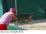 Купить «Женщина фотографирует тигра», эксклюзивное фото № 6828015, снято 16 августа 2013 г. (c) Щеголева Ольга / Фотобанк Лори