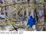 Сосновая ветка с Рождественской звездой. Стоковое фото, фотограф Ирина Черкашина / Фотобанк Лори