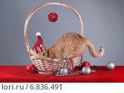 Кошка прячется в корзинке. Стоковое фото, фотограф Елена Беззубцева / Фотобанк Лори