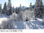 Зимний лес в ясную солнечную погоду оставляет красивык тени на снегу. Стоковое фото, фотограф Попов Роман / Фотобанк Лори