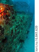 Купить «Затонувший корабль оброс кораллами», фото № 6841639, снято 11 февраля 2013 г. (c) Сергей Дубров / Фотобанк Лори