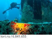 Купить «Дайвер фотографирует затонувшее судно», фото № 6841655, снято 11 февраля 2013 г. (c) Сергей Дубров / Фотобанк Лори