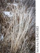 Зимняя трава. Стоковое фото, фотограф Екатерина Рыжова / Фотобанк Лори