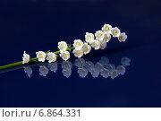Ландыши. Стоковое фото, фотограф Раушания Аппакова / Фотобанк Лори